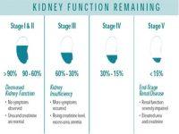 1. 1 CREA estadios IRIS y funcionalidad renal remanente