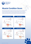 1.1.MuscleConditionScore