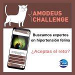 18-05-2021-Post Amodeus Challenge Ceva