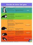 2.1 escala de dolor gatos espanol
