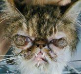 2.2a Dolor Ocular Herpesvirus