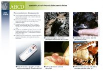 www.abcdcatsvets.org/wp-content/uploads/2015/09/ES_FeLV_Infec