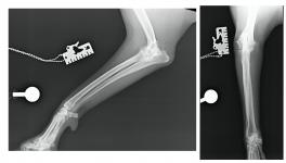 Clave 1 artrosis perro