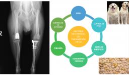 Clave 5 Tratamiento multimodal artrosis
