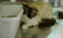 Foto 2 gato agresivo