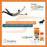 Post Lesigaurd Ecuphar-4