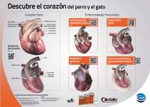 Poster 3D cardio