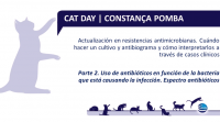 catday2