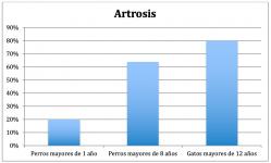 grafica incidencia de la artrosis en perros y gatos